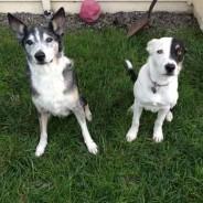 photo two black/white dogs